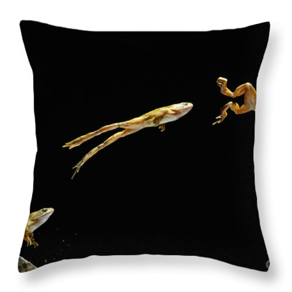 Common Frog Leaping Throw Pillow by Stephen Dalton