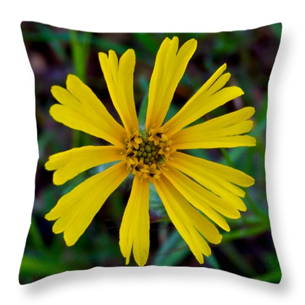 Common Madia In Park Sierra-ca Throw Pillow by Ruth Hager