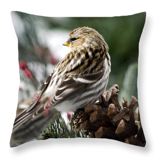 Common Redpoll Throw Pillow by Christina Rollo