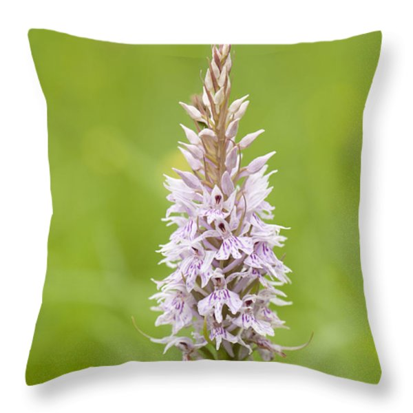 Common Spotted Throw Pillow by Anne Gilbert