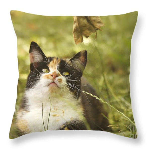 Concentration Throw Pillow by Jutta Maria Pusl