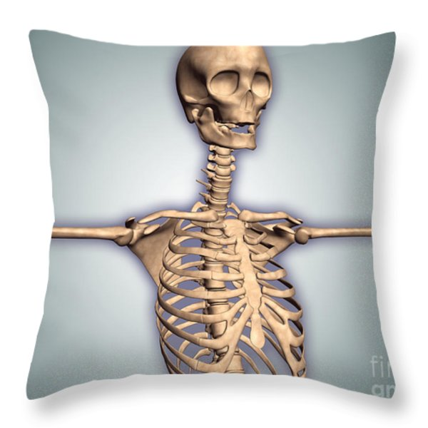 Conceptual Image Of Human Rib Cage Throw Pillow by Stocktrek Images