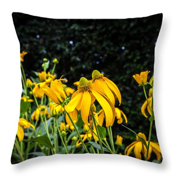 Coneflowers Echinacea Yellow Painted Throw Pillow by Rich Franco