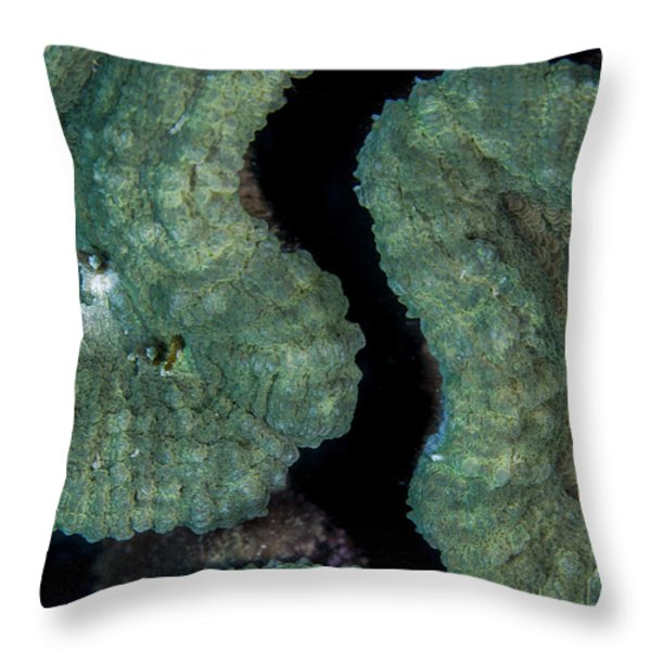 Coral Puzzle Throw Pillow by Jean Noren
