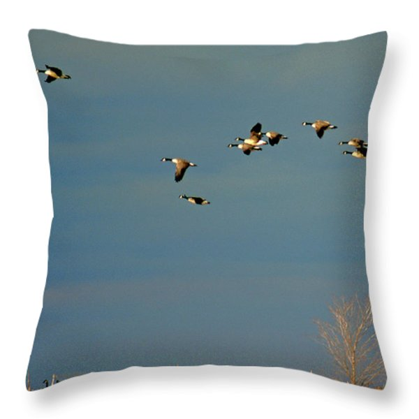 CORN FOR BREAKFAST Throw Pillow by Skip Willits