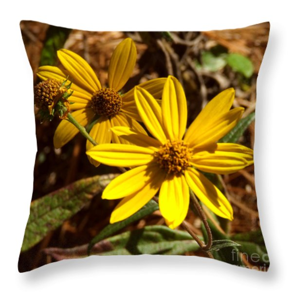 Cosmos Flower Throw Pillow by Andrea Anderegg