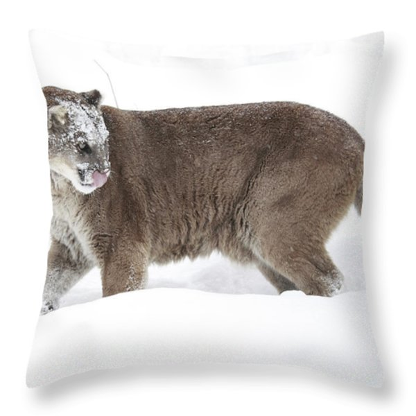 Cougar on a Winter Prowl Throw Pillow by Inspired Nature Photography By Shelley Myke