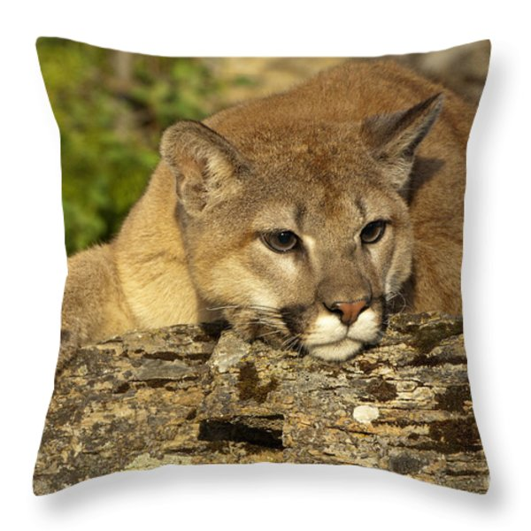 Cougar On Lichen Rock Throw Pillow by Sandra Bronstein
