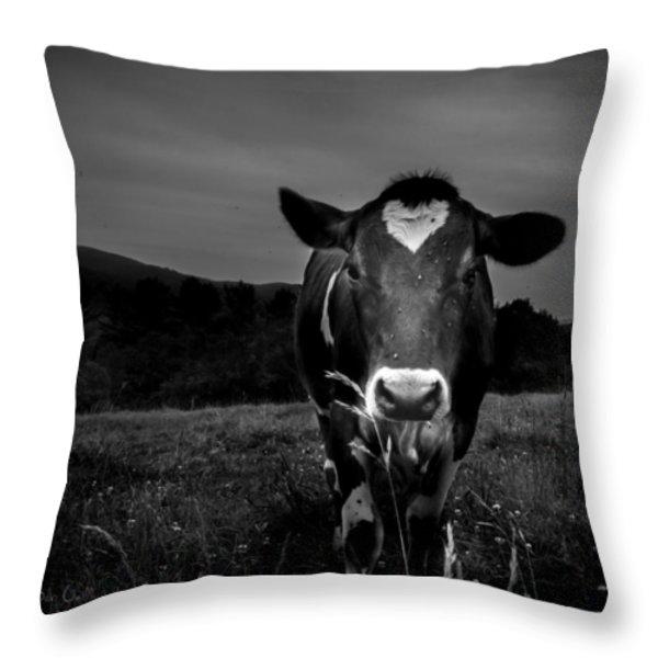 Cow Throw Pillow by Bob Orsillo