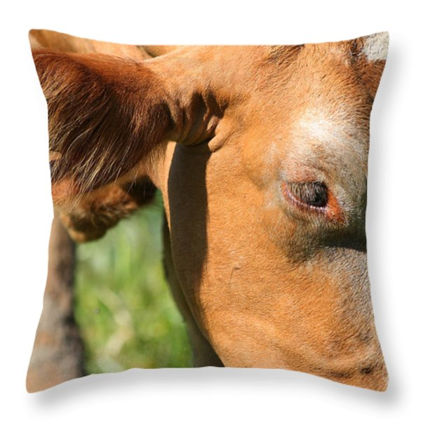 Cow Closeup 7D22391 Throw Pillow by Wingsdomain Art and Photography