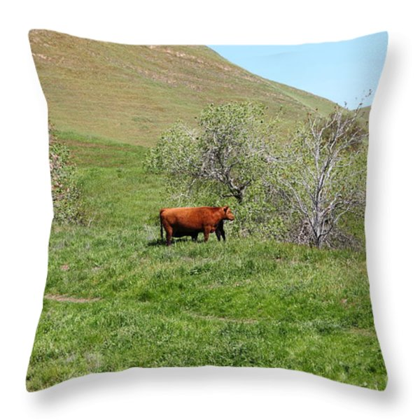 Cows Along The Rolling Hills Landscape of The Black Diamond Mines in Antioch California 5D22303 Throw Pillow by Wingsdomain Art and Photography