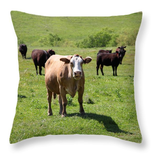 Cows Along The Rolling Hills Landscape of The Black Diamond Mines in Antioch California 5D22341 Throw Pillow by Wingsdomain Art and Photography