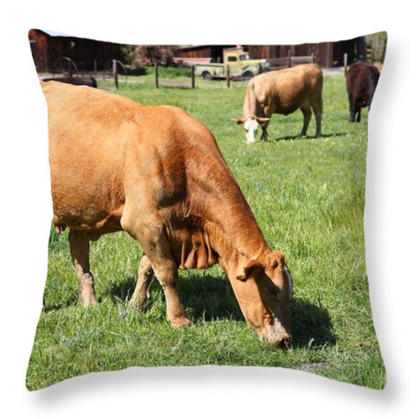 Cows Home On The Ranch At The Black Diamond Mines in Antioch California 5D22358 Throw Pillow by Wingsdomain Art and Photography