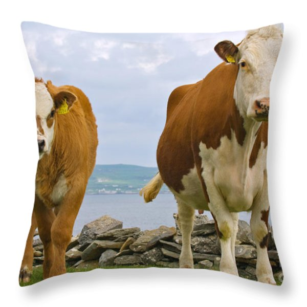 Cows Throw Pillow by Terry Whittaker