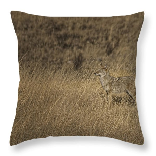 Coyote Standing In Field Of Dried Throw Pillow by Roberta Murray