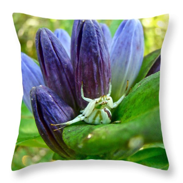 Crab Spider On Closed Gentian Wildflower - Gentiana Andrewsii Throw Pillow by Mother Nature