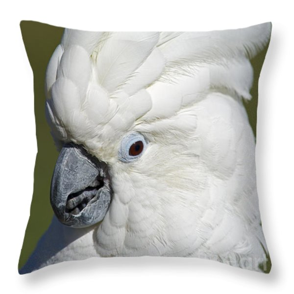 Crazy As Crackers... Throw Pillow by Nina Stavlund