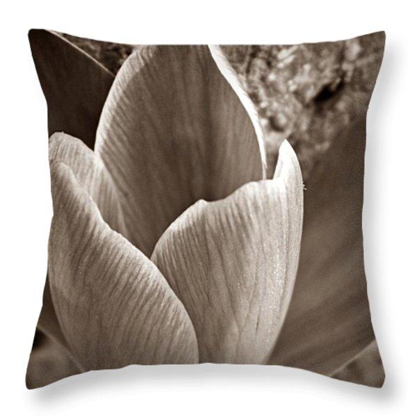 Crocus  Throw Pillow by Chris Berry