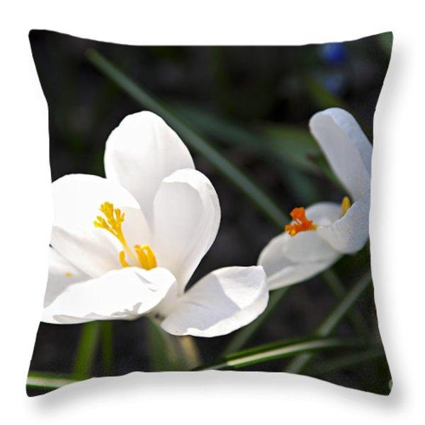 Crocus Flower Basking In Sunlight Throw Pillow by Elena Elisseeva