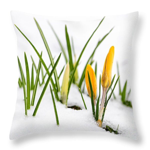 Crocuses in snow Throw Pillow by Elena Elisseeva