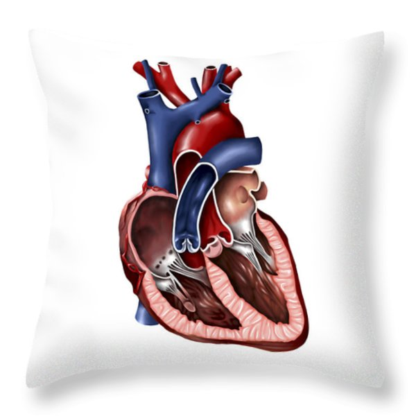 Cross Section Of Human Heart Throw Pillow by Stocktrek Images