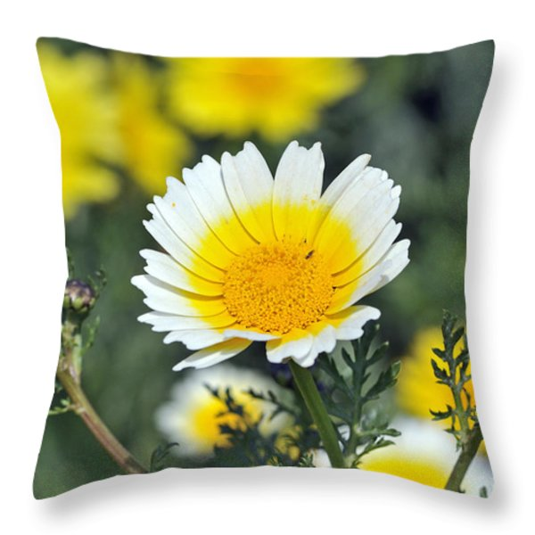 Crown daisy flower Throw Pillow by George Atsametakis