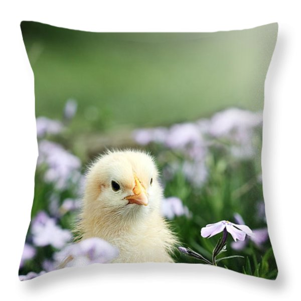 Curious Chick Throw Pillow by Stephanie Frey