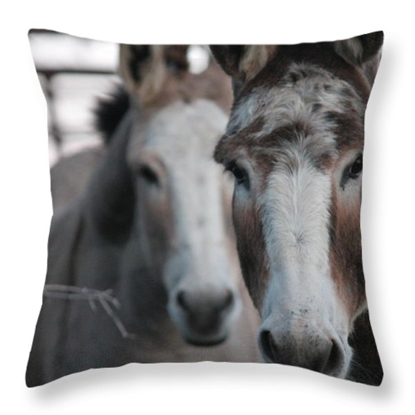 Curious Donkeys Throw Pillow by Lorri Crossno