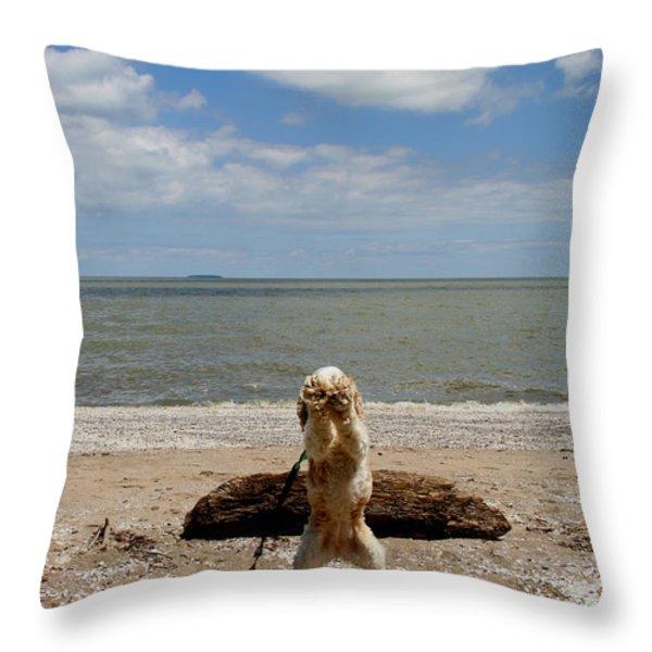 Cute Cocker Spaniel Throw Pillow by Dan Sproul