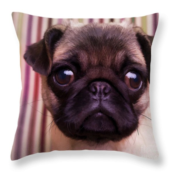 Cute Pug Puppy Throw Pillow by Edward Fielding