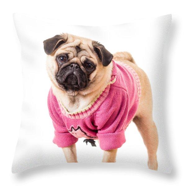 Cute Pug wearing sweater Throw Pillow by Edward Fielding