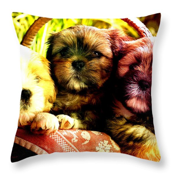 Cute Terrier Puppies Throw Pillow by Marvin Blaine