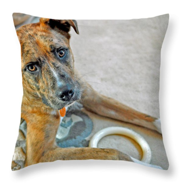 Cyrus Throw Pillow by Lisa Phillips