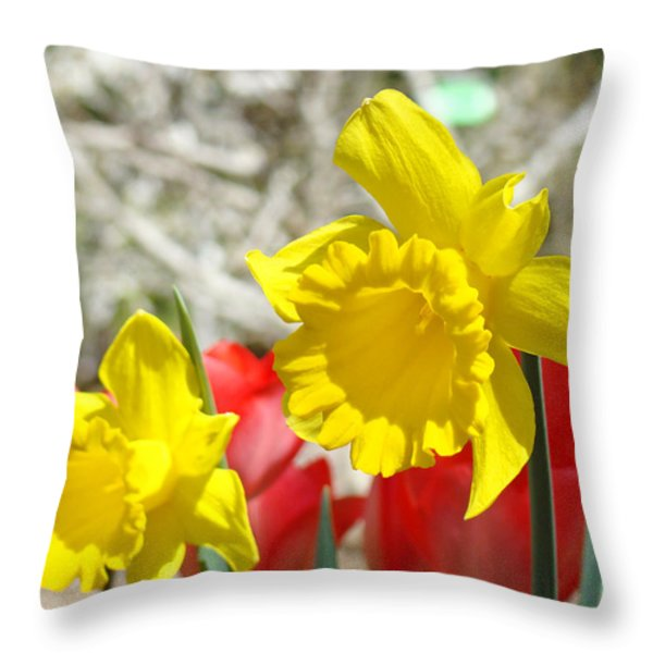 Daffodil Flowers art prints Spring Daffodils Red Tulip Garden Throw Pillow by Baslee Troutman