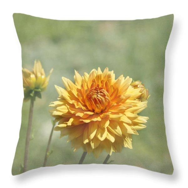 Dahlia Flowers Throw Pillow by Kim Hojnacki