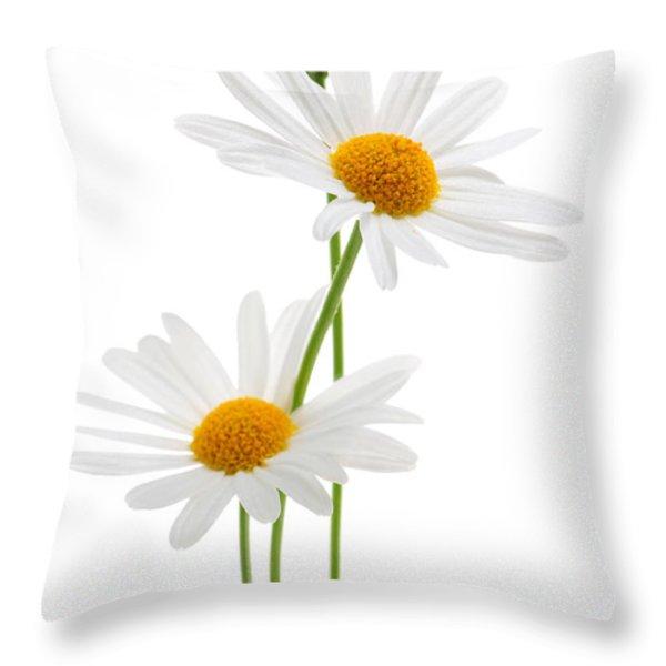 Daisies on white background Throw Pillow by Elena Elisseeva