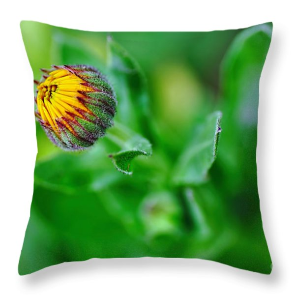 Daisy Bud ready to bloom Throw Pillow by Kaye Menner