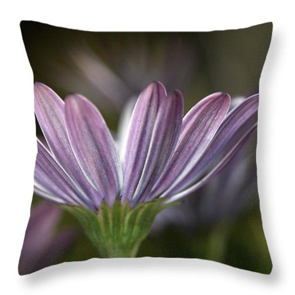 Daisy Delight Throw Pillow by Joy Watson
