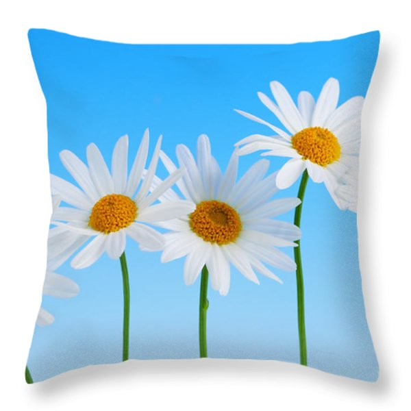 Daisy flowers on blue background Throw Pillow by Elena Elisseeva