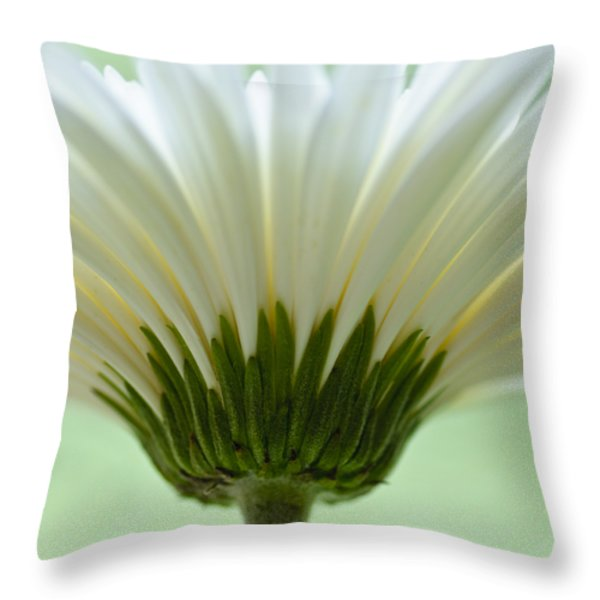 Daisy Sweetness Throw Pillow by Christi Kraft