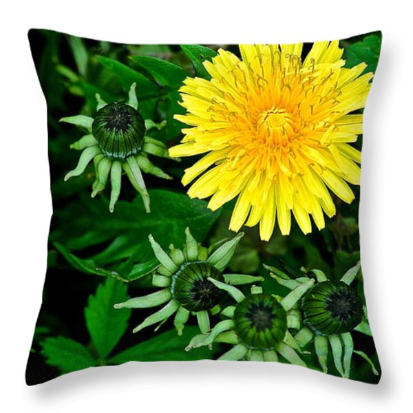 Dandelion Farm Throw Pillow by Frozen in Time Fine Art Photography
