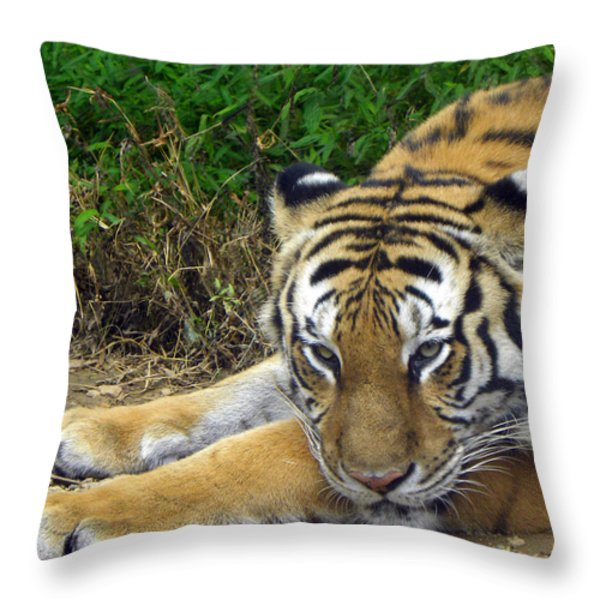 Daydreaming Throw Pillow by Sandi OReilly