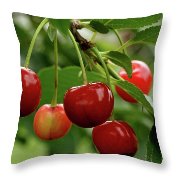 Delicious Cherries Throw Pillow by Sandy Keeton