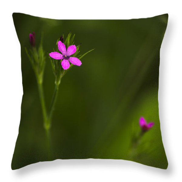 Deptford Pink Throw Pillow by Christina Rollo
