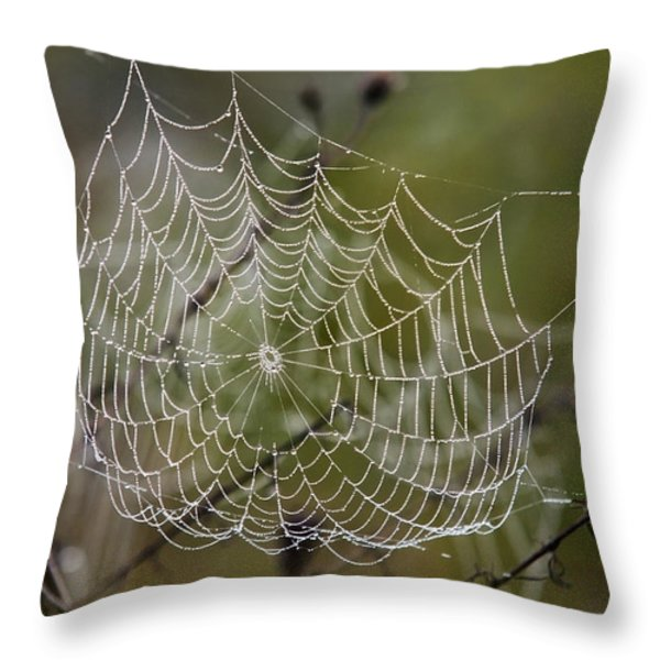 Dew Drops Spider Web Throw Pillow by Christina Rollo