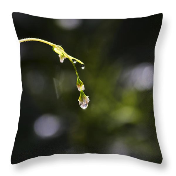 Diamond In The Rough Throw Pillow by Christina Rollo