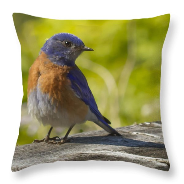 Distracted Throw Pillow by Jean Noren