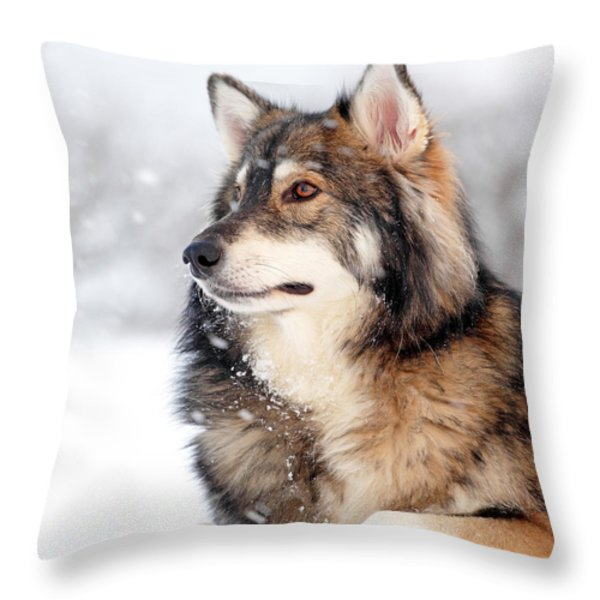 Dog in the snow Throw Pillow by Grant Glendinning