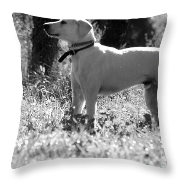 Dog On Guard Throw Pillow by Kathleen Struckle