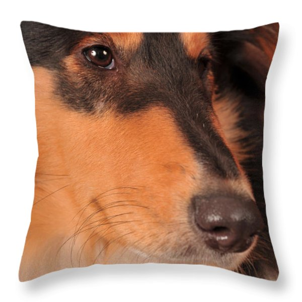 Dog Portrait Throw Pillow by Randi Grace Nilsberg